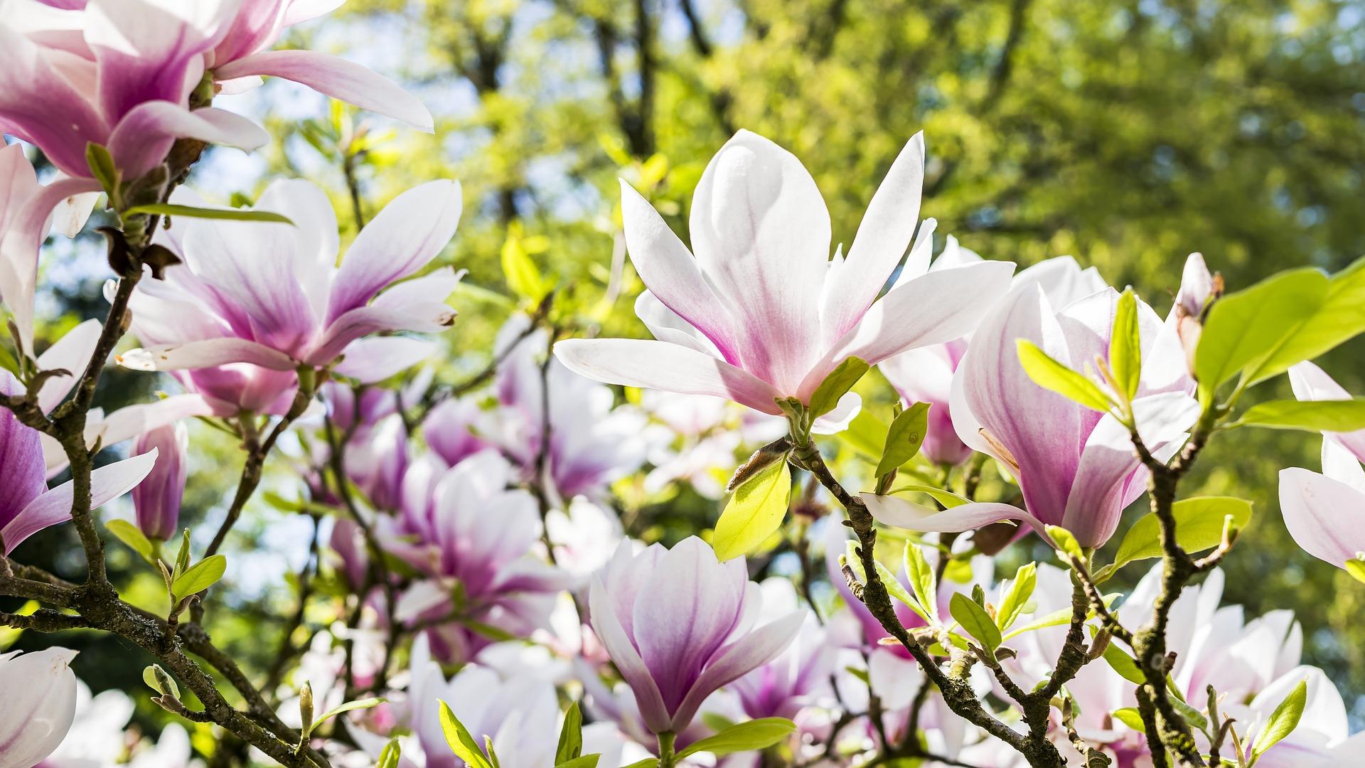 7 tips om je tuin lenteklaar te maken
