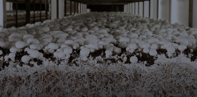Mushrooms industry